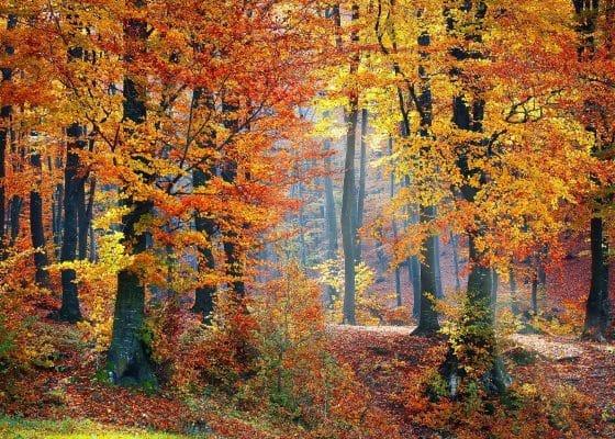 Herbst ist Wanderzeit: Die schönsten Routen in Hessen