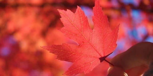 Gedicht im Herbst