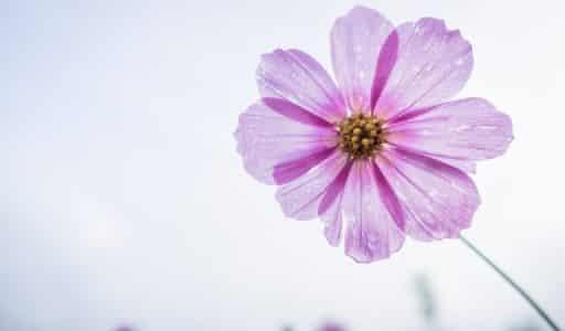 So gelingen schöne und kreative Blumenfotos im Frühling
