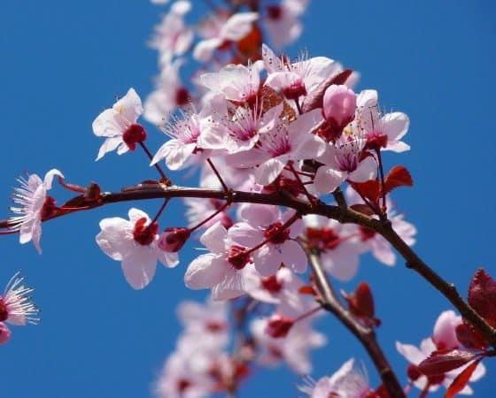 Gedicht im Frühling: Goethes Torquato Tasso