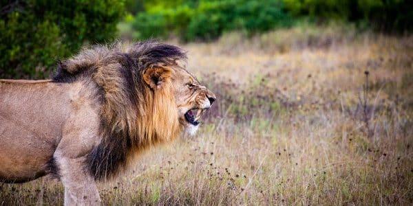 Deutsche fordern Importierverbot für Jagdtrophäen