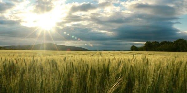 Lebendige Landwirtschaft: Meinungen zu EU-Agrarpolitik